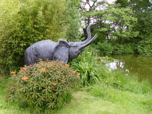 Ros' elephant by her famous pond