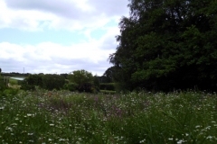 A view across the wildflower meadow