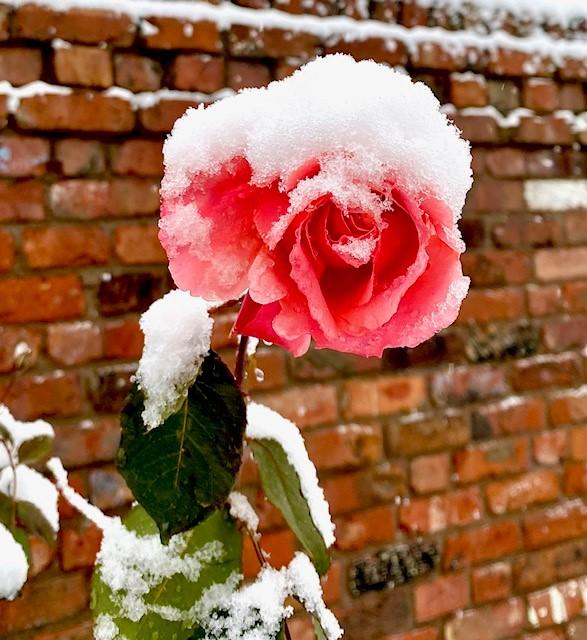 Winter-cheer