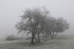 Rosalie-2 foggy frosty morning