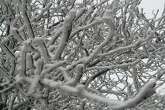 Sylvia-winter-3