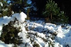 Winter-on-hednesford-Hills-5