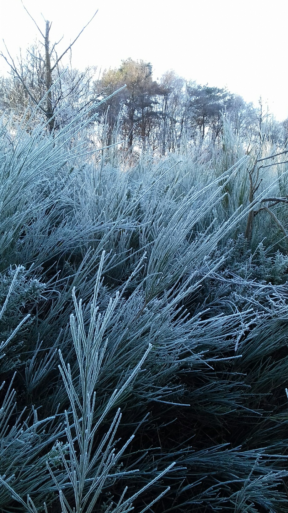 1_Frost-on-Hednesford-Hills