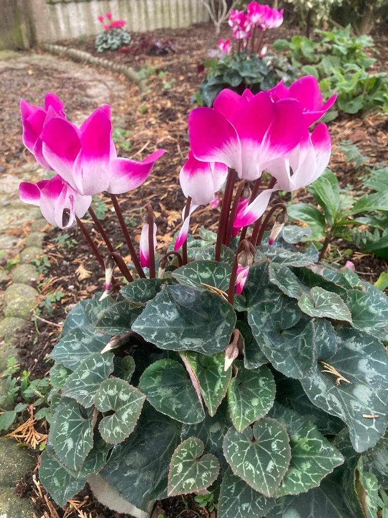 Gardens-Lesley-autumn-1