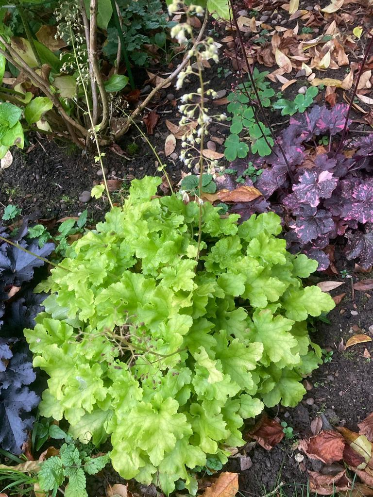 Gardens-Lesley-autumn-2