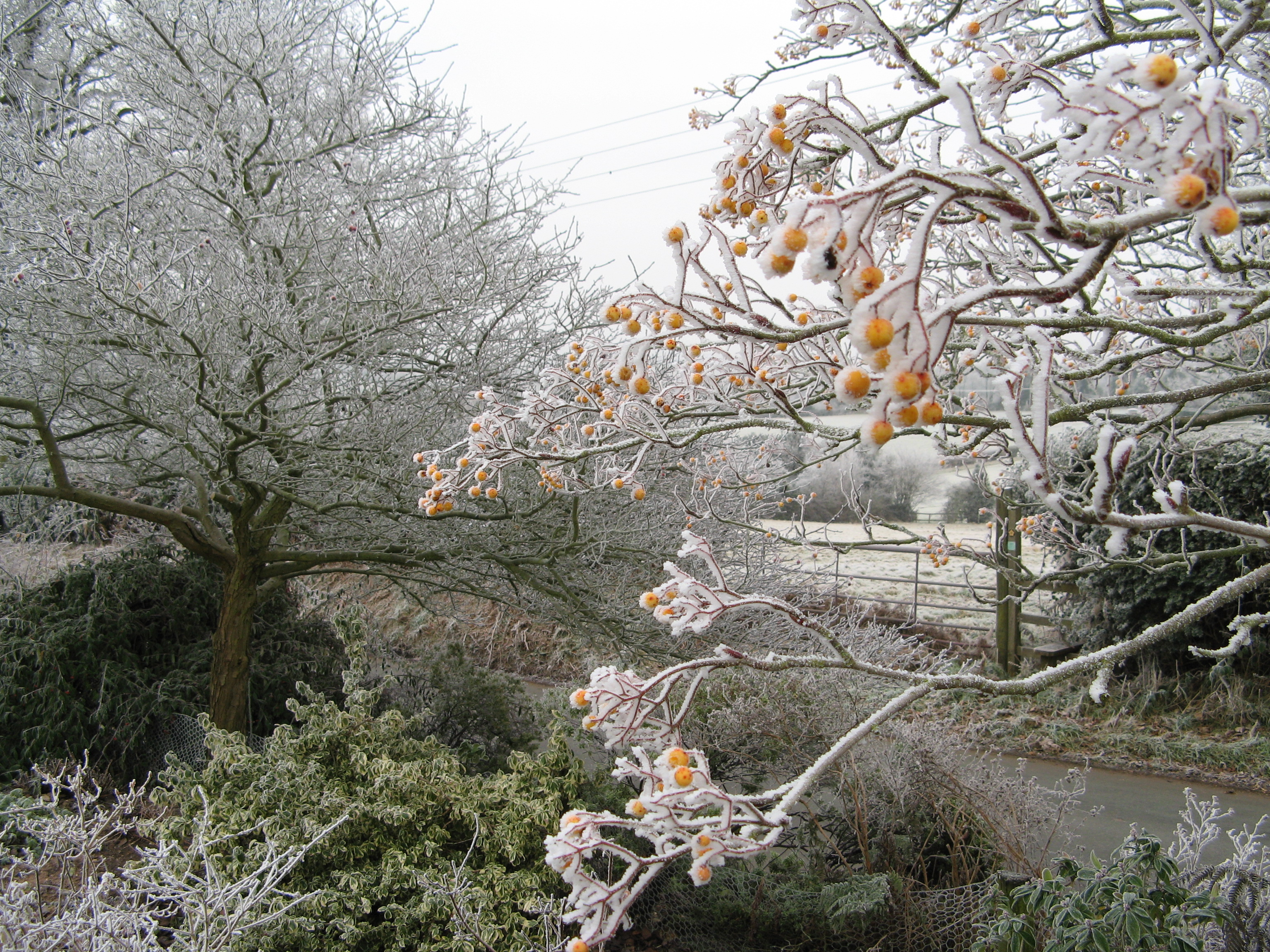 Frosty morning at Lilac cottage Front Garden
