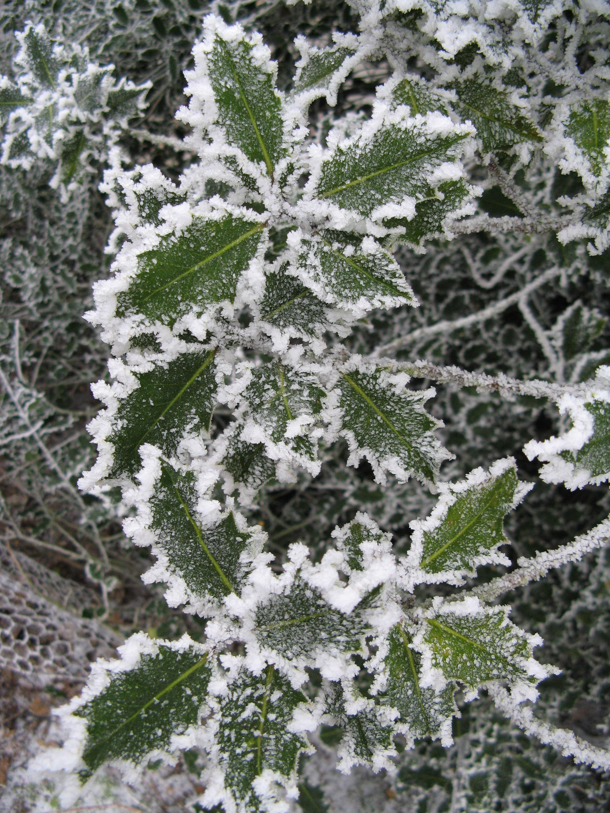 Gardens-Sylvia-winter-4