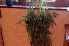Gardens-Lesley-spider-plant