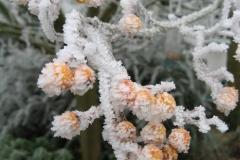 Gardens-Sylvia-winter-2