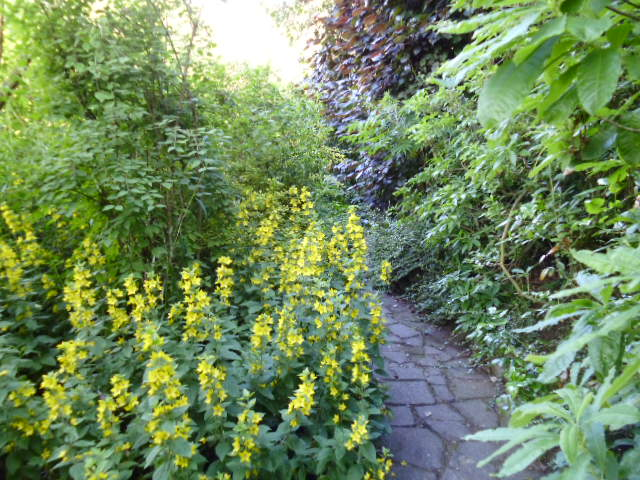 One of many inviting pathways with lysimachia in foreground