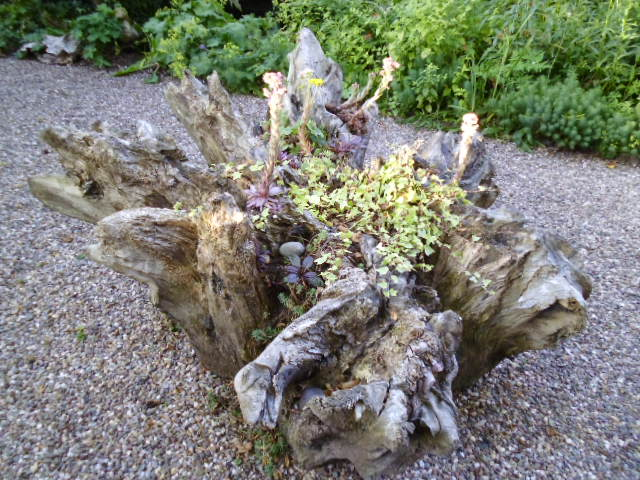 Beautiful planting in the tree stump (photo doesn't do it justice!)